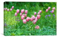 Pink Tulips 1 , Canvas Print
