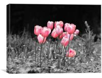 Tulips standing out, Canvas Print