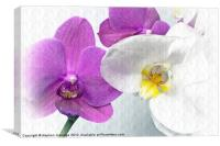 Purple and white orchids textured, Canvas Print