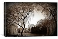 Weeping willow 2, Canvas Print