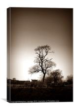 Old tree in sepia, Canvas Print