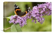 Red Admiral in Oils, Canvas Print