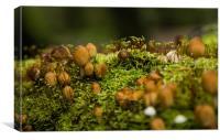 Fungi Landscape, Canvas Print