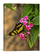 Butterfly on pink flowers, Canvas Print