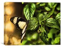 Butterfly on leaves, Canvas Print