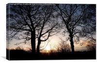 Winter Trees - Oakwell Park, Birstall, West Yorksh, Canvas Print