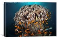 Coral Head, Canvas Print
