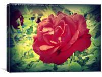 The English Rose, Canvas Print