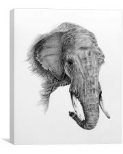 Fine art drawing, of elephant, Canvas Print