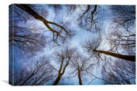 Spring Tree sky view, Canvas Print