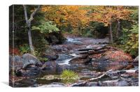 Fall, Upper Magnetawan River, Canvas Print