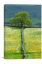 Lone Tree and Stone Wall, Canvas Print