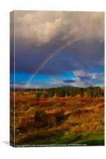 Rainbow over Rithets Bog, Victoria, Canvas Print