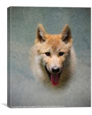 Wolf pup, Canvas Print