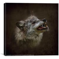 Big Bad Wolf, Canvas Print