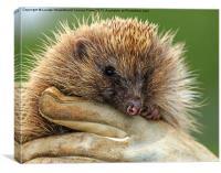 The Hedgehog, Canvas Print