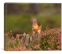 Red Squirrel in Autumn, Canvas Print