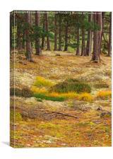 Lichens and Grasses, Canvas Print