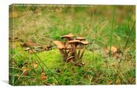 Honey Fungus, Canvas Print