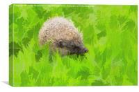 European hedgehog, Erinaceus europaeus, Canvas Print