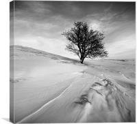 Winters tree mono, Canvas Print