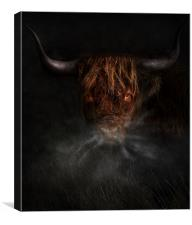 A west highland cow, Canvas Print
