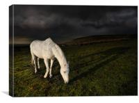 The white horse, Canvas Print