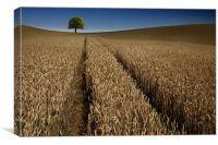 Tree in a sea of wheat, Canvas Print