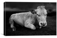 A bull called Emo, Canvas Print