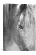 wisper the horse, Canvas Print