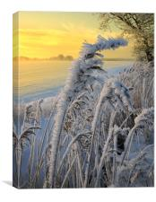 Frosts in the grass, Canvas Print