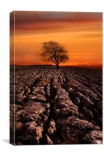 Malham tree sunrise, Canvas Print