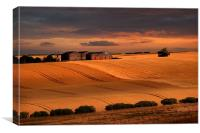 last light over the wheat fields, Canvas Print