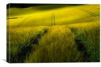 Rolling wheat fields, Canvas Print