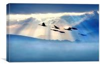 Dawn flight, Canvas Print