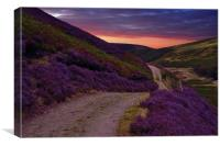 Heather on the moors,, Canvas Print