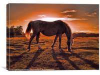 evening graze, Canvas Print