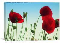 Poppy Power, Canvas Print