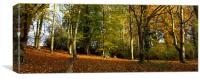 Melbourn woodland, Canvas Print