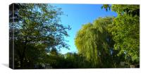 Weeping Willow Tree, Canvas Print