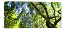 Weeping Willow Tree with blue sky, Canvas Print