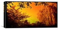 Sepia willow with a golden tint, Canvas Print