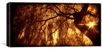 Willow Sepia with the Sunstar, Canvas Print