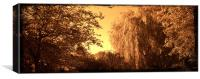 Sepia willow, Canvas Print