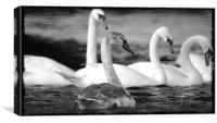 Swans at Wroxham, Canvas Print