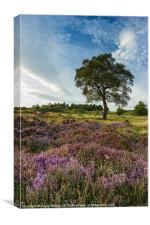 Heather and Hawthorn, Canvas Print