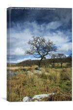 Hawthorn Awaits, Canvas Print