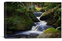 Spring Into Wyming Brook, Canvas Print