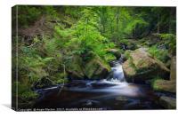 Wyming Brook in Spring, Canvas Print
