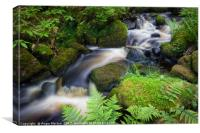 Babbling Wyming Brook, Canvas Print